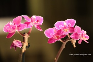 Barcelona_Abac_Orchids