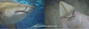 Barcelona_Aquarium_Shark&Ray