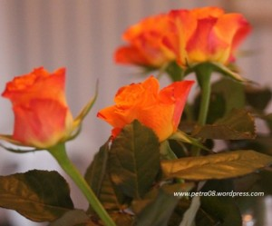 P-Roses