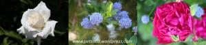 29June_Flowers