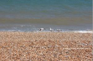 Kent_Beach