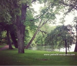 07AugSweden_Trees