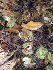 20Oct_Chestnuts