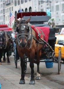 03Dec_Horse&Carriage