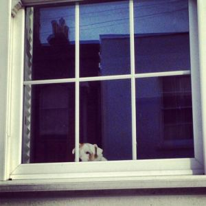28Feb_DogInWindow