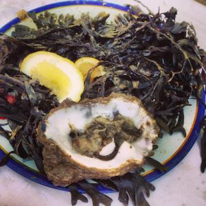 Wild Oyster