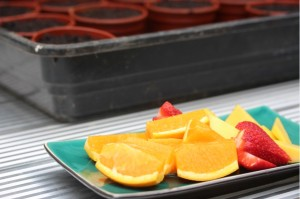 26April_FruitPlate
