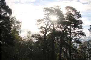 Uto-SunThroughTrees