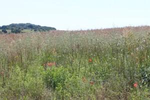 03Aug_Meadow