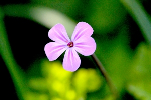 07May_PinkFlower