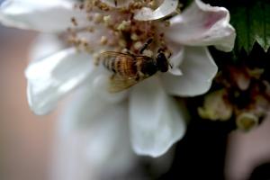 21May_Bee