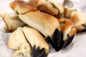 10Jan_CrabClaws
