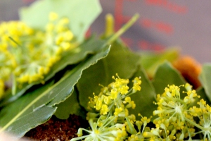 wild fennel flower and bay leaf cure mix