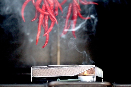 cold smoking chiles
