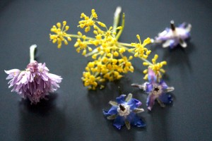 edible flowers boarge, chive, fennel