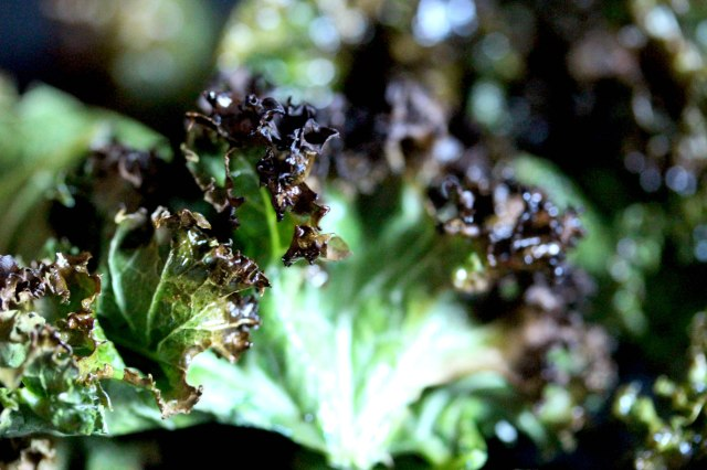 crispy curly kale