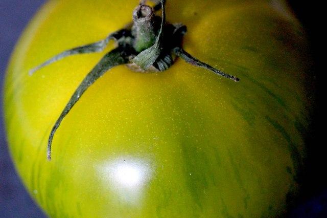 green heritage tomato