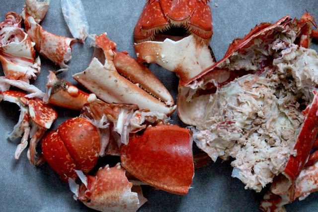 lobster shells