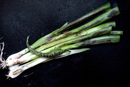torched green chilli and spring onion