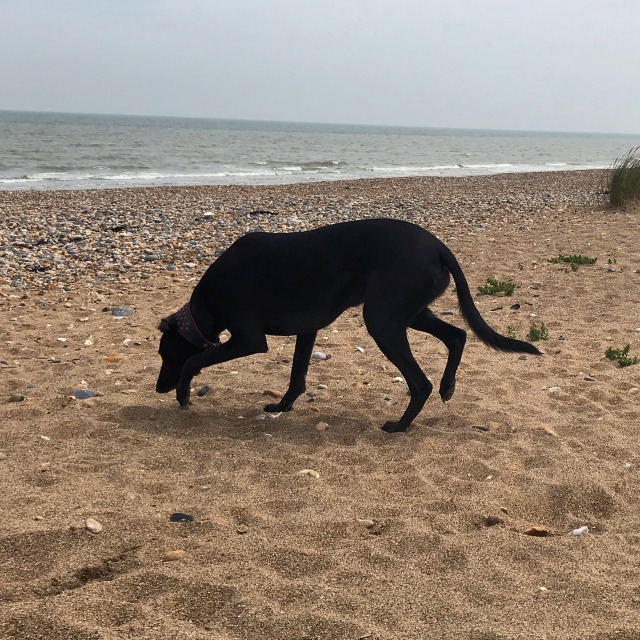 Libby on the beach